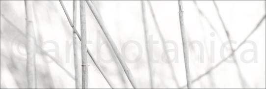Einzigartige Kompositionen aus dem Bereich der Schwarz-Weiß Fotografie